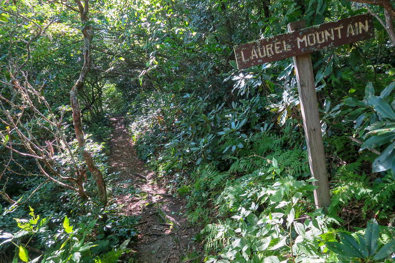 Laurel Mountain Trail -- 4,980'