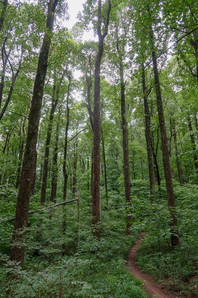 Laurel Mountain Trail @ Rich Gap -- 3,600'