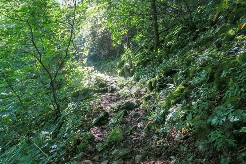 Laurel Mountain Trail -- 4,750'