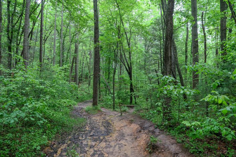Ledford Branch Trail -- 2,250'
