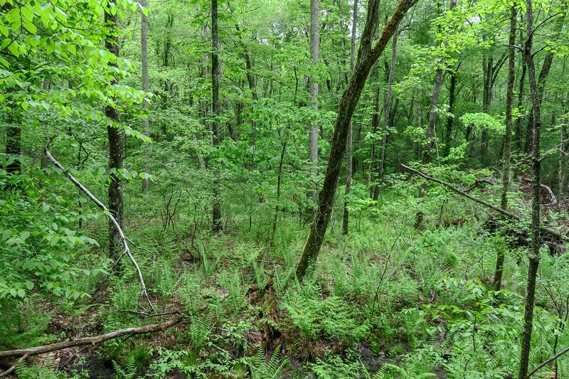 Ledford Branch Trail -- 2,240'