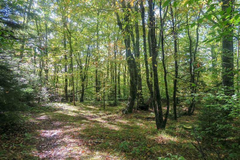 Little East Fork Trail -- 5,100'