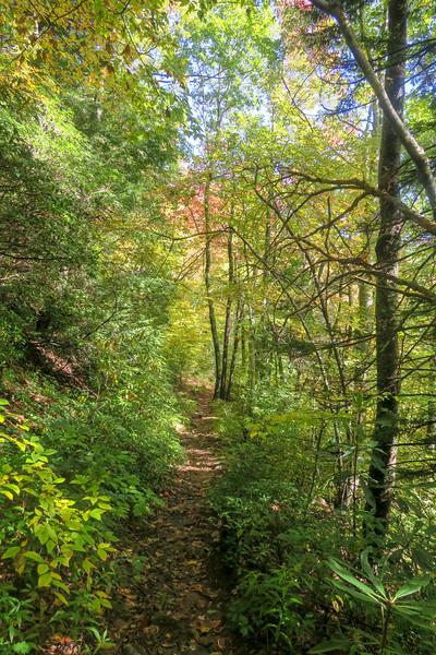 Little East Fork Trail -- 5,050'