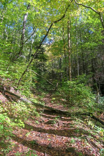 Little East Fork Trail -- 4,650'