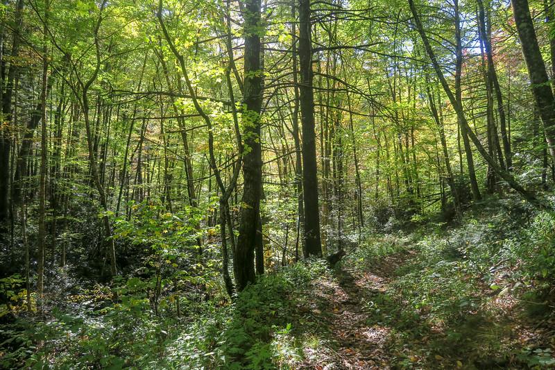 Little East Fork Trail -- 4,600'