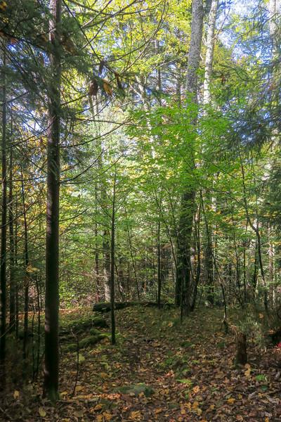 Little East Fork Trail -- 5,200'