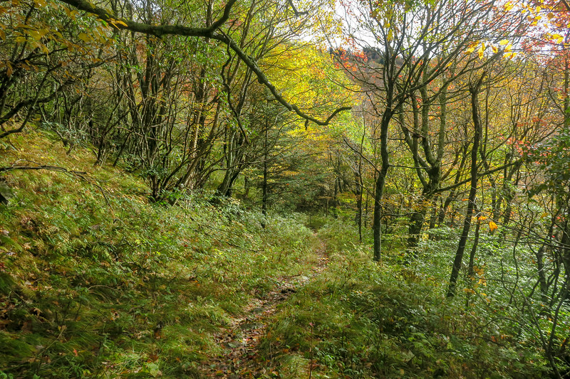 Little East Fork Trail -- 5,500'