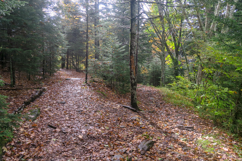 Little East Fork/Ivestor Gap Trail Junction -- 5,700'