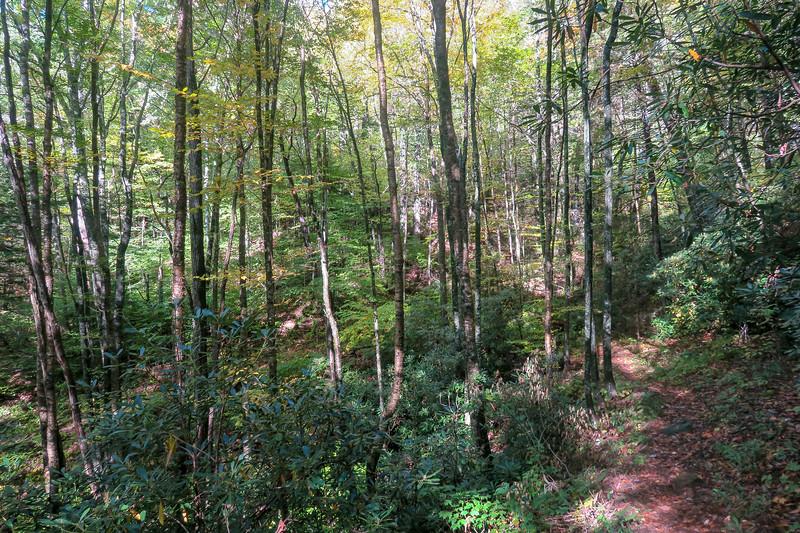Little East Fork Trail -- 4,700'