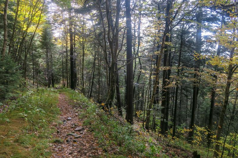 Little East Fork Trail -- 5,600'