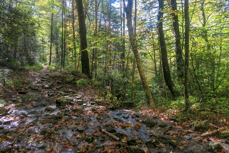 Little East Fork Trail -- 4,950'