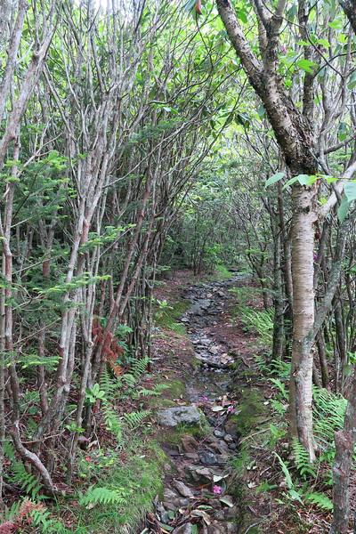 Little Sam Trail -- 5,550'