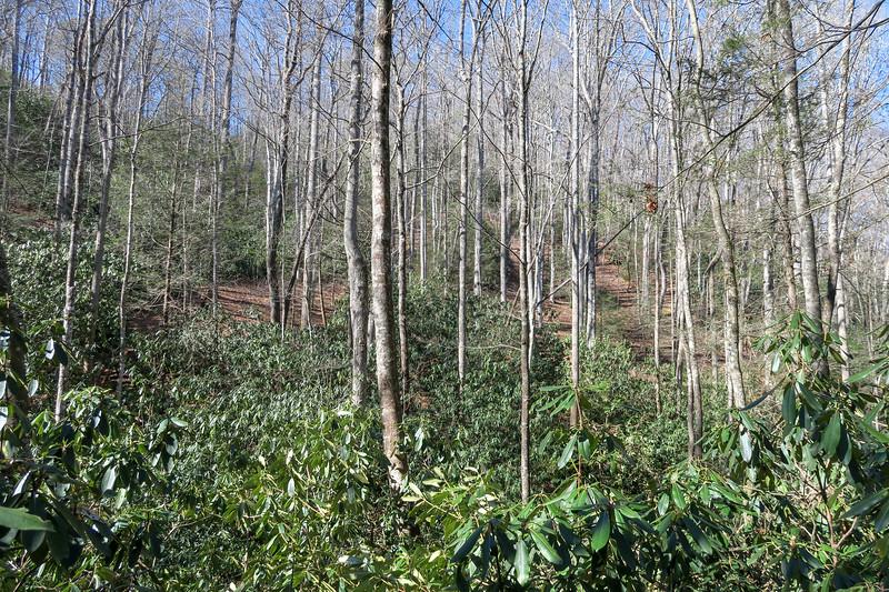 Long Branch Trail -- 2,680'