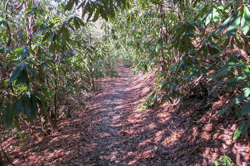 Long Branch Trail -- 2,650'
