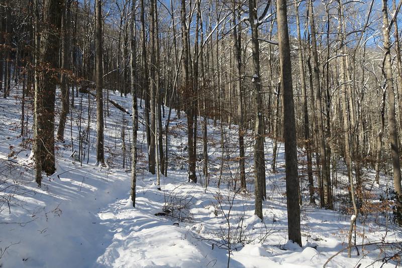 Looking Glass Rock Trail -- 2,650'