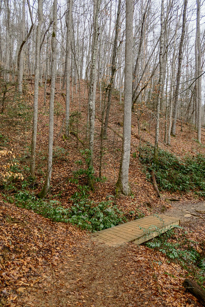 Moore Cove Trail -- 2,470'