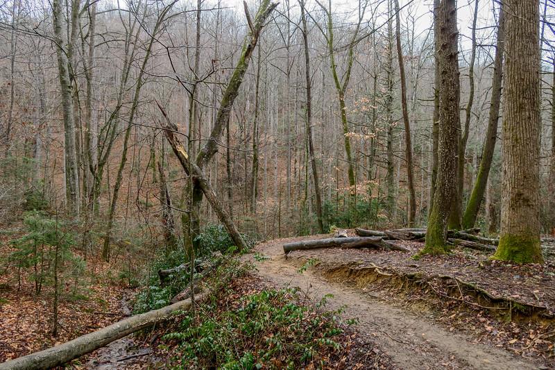 Moore Cove Trail -- 2,480'