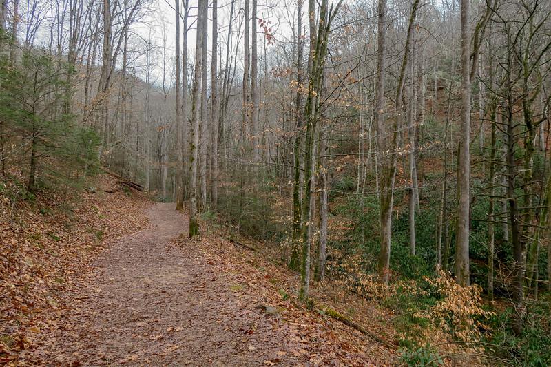 Moore Cove Trail -- 2,500'
