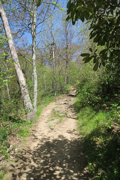 Mount Pisgah Trail -- 5,020'