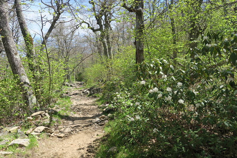 Mount Pisgah Trail -- 4,980'