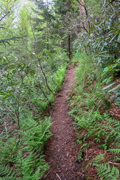 Mountains-to-Sea Trail -- 5,210'