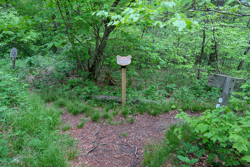 Mountains-to-Sea/Haywood Gap Trail Junction -- 5,220'