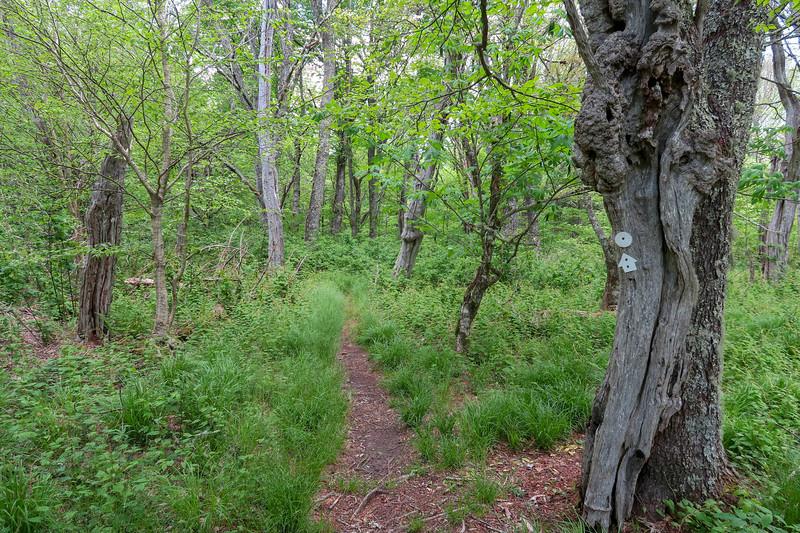 Mountains-to-Sea Trail -- 5,220'
