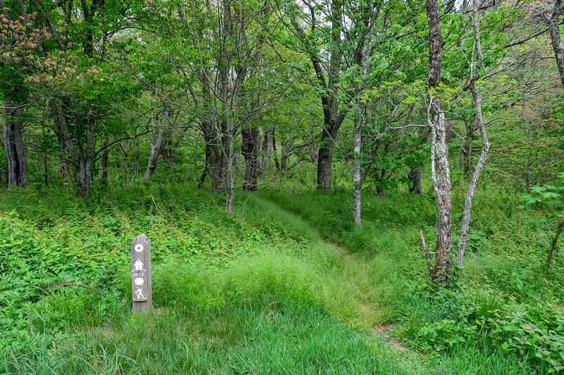 Mountains-to-Sea Trail @ Haywood Gap -- 5,225'