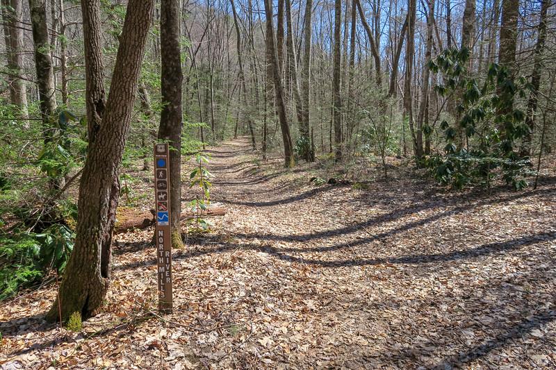 North Mills River Trail -- 2,370'