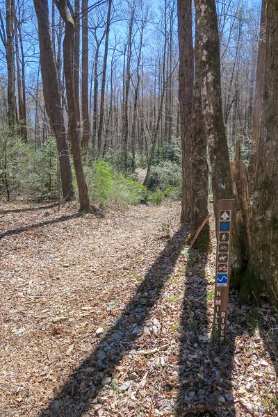 North Mills River Trail -- 2,390'