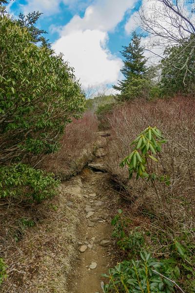 Old Butt Knob Trail -- 5,960'