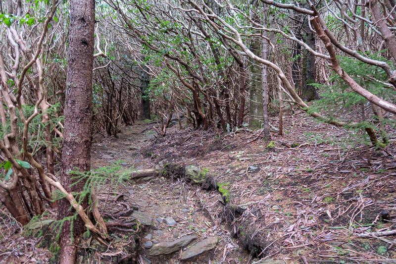 Old Butt Knob Trail -- 5,790'