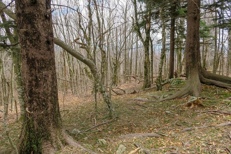 Old Butt Knob Trail -- 5,720'