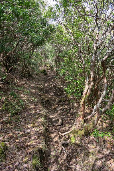 Old Butt Knob Trail -- 5,750'