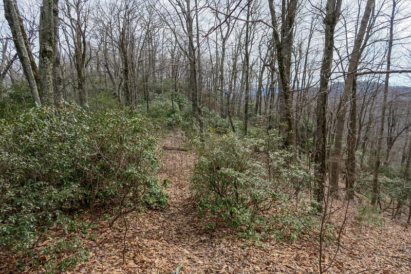 Pilot Cove Loop Trail -- 3,800'