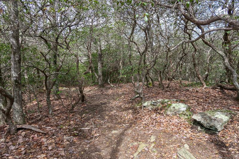 Pilot Cove Loop Trail -- 3,900'