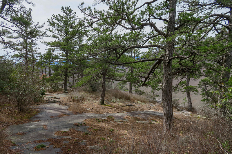 Pilot Cove Loop Trail @ Slate Rock -- 3,740'