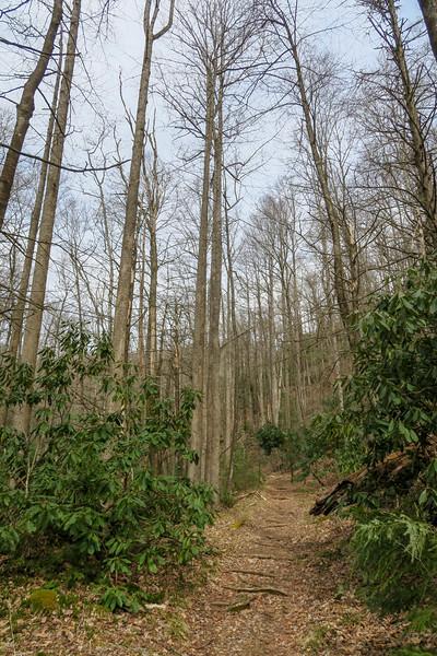 Pilot Cove-Slate Rock Trail -- 2,980'