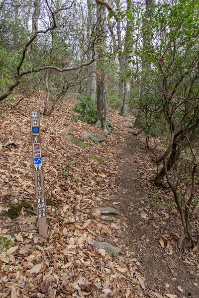 Pilot Rock Extension/Pilot Rock Trail Junction -- 3,720'