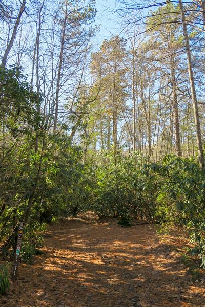 Pine Tree Connector/Explorer Loop Trail Junction -- 2,230'