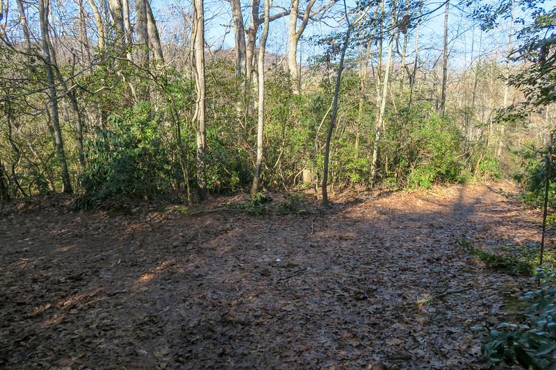 Pine Tree Connector/Pine Tree Loop Trail Junction -- 2,250'
