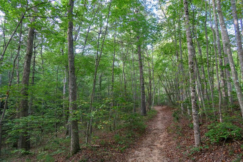 Pine Tree Loop/Deerfield Loop Trail -- 2,300'