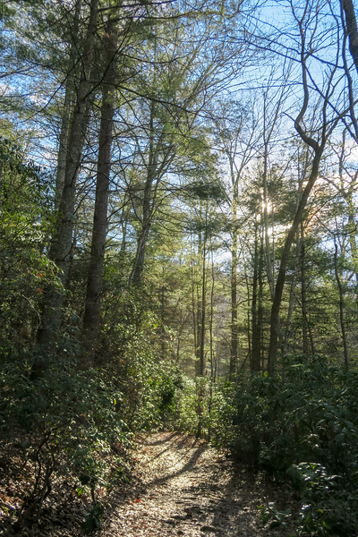Pine Tree Loop Trail -- 2,360'