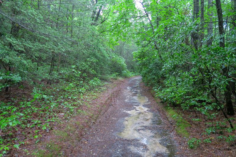 Pink Beds Loop Trail -- 3,290'