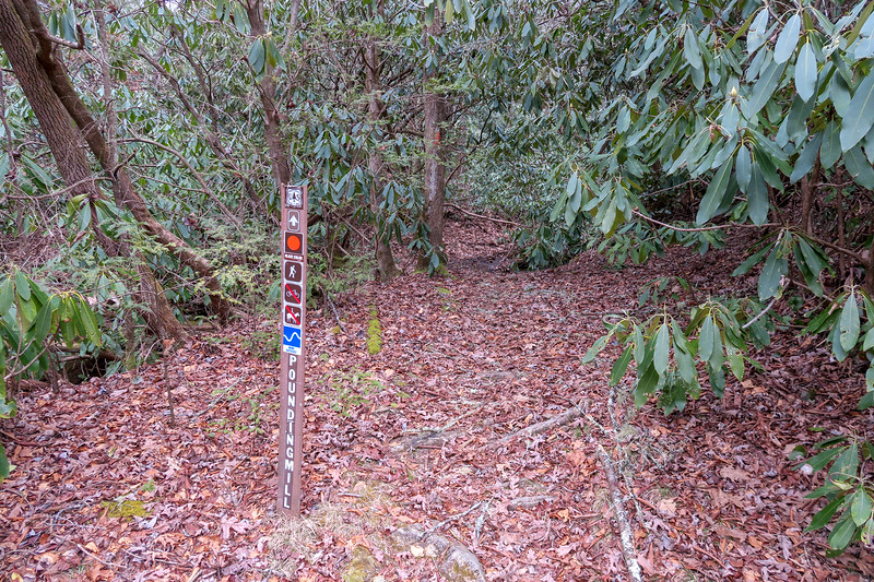 Poundingmill/South Mills River Trail Junction -- 2,460'