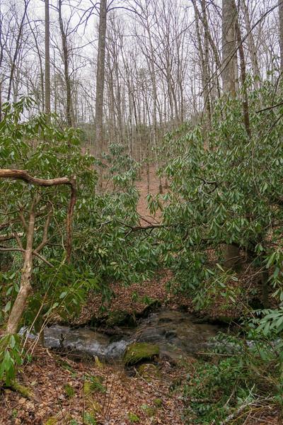 Poundingmill Trail (Crossing #3) -- 2,550'