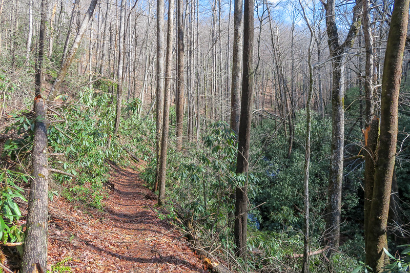 Pressley Cove Trail -- 2,620'