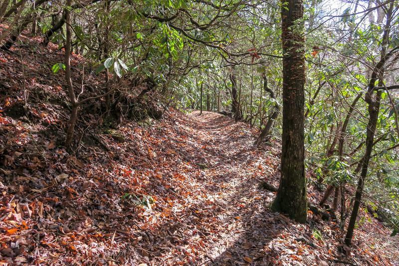 Pressley Cove Trail -- 2,380'