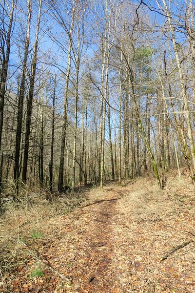 Pressley Cove Trail -- 2,320'