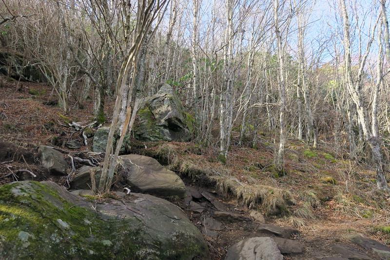 Sam Knob Summit Trail -- 5,840'